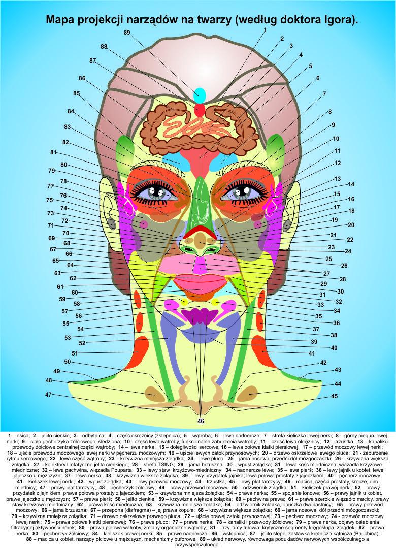 Plakat Mapa Twarzy Centrum Akupunktury Doktor Igor